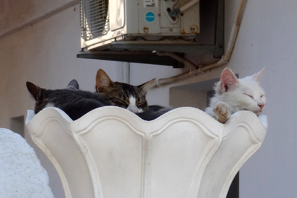 Katte i krukke