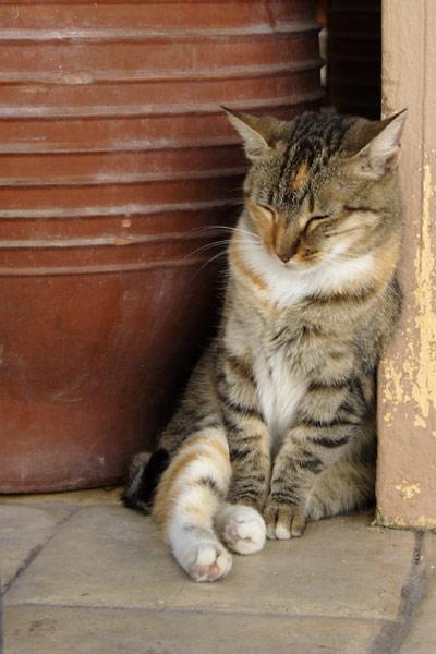 Søvnig kat i Mastichari