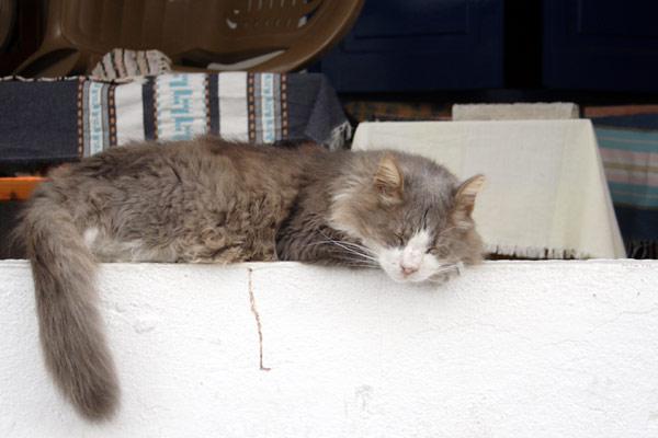 Sovende kat på Kos